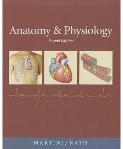 Test Bank (Download Only) for Anatomy & Physiology, 2nd Edition, Martini Nash, 0321597133, 9780321597137