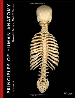 Test Bank (Download Only) for Principles of Human Anatomy 13th Edition, Tortora Nielsen, 1118344995, 9781118344996