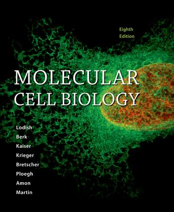 Test Bank for Molecular Cell Biology, 8th Edition, Harvey Lodish; Arnold Berk; Chris A. Kaiser; Monty Krieger; Anthony Bretscher; Hidde Ploegh; Angelika Amon; Kelsey C. Martin, ISBN-10: 1464183392, ISBN-13: 9781464183393