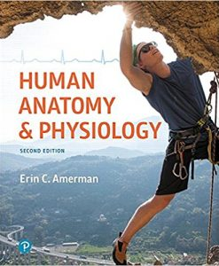 Test Bank for Human Anatomy and Physiology 2e by Amerman