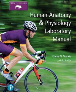 Solution Manual (Download Only) For Human Anatomy & Physiology Laboratory Manual, Main Version, 12th Edition By Elaine N. Marieb,Lori A. Smith ISBN-13:9780134778839
